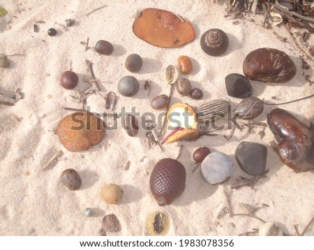 On the beach where seeds are collected, Ilha do Marajó Foto stock ©