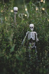 On The Eve Of Halloween. The garden is filled with dark and terrible objects and signs. Decoration in the Gothic style.