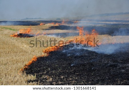 On the field after harvesting grain crops burning stubble and straw