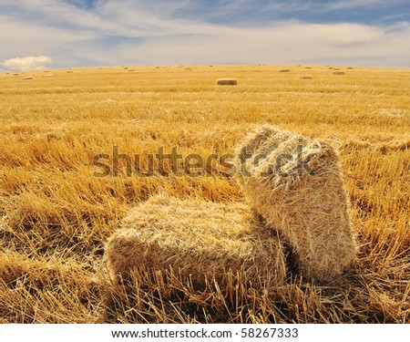 On the field, ending summer - stock photo
