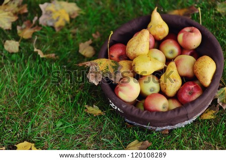 on the green grass is a basket of apples and pears