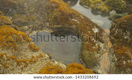 on the island in the rock natural depression in the shape of a heart, close to the rocks and seaweed of different vivid colors #1433208692