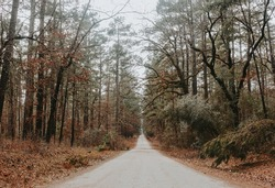 on the road at Davy Crockett National Forest
