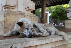 On the street sleeping dog. Spotted dog. Sleeping during the day.