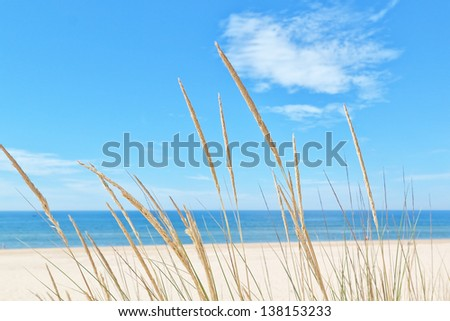On the summer beach kind of grass on a background of sky and sea.
