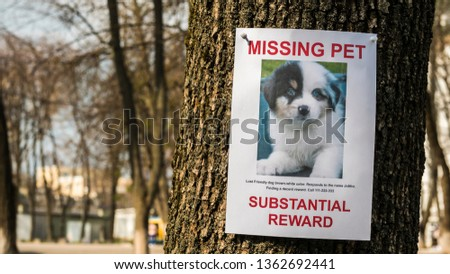 On the tree hangs the announcement of the missing puppy