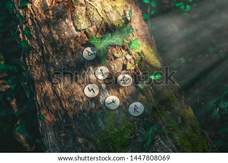 On the trunk of a tree, covered with ivy, are wooden Scandinavian runes. Mystic light. The concept of divination and esotericism #1447808069