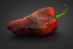 One almost ripe red with green spots spotty Poblano chili pepper on black background.