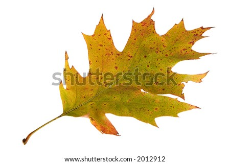 one autumn leaf as background
