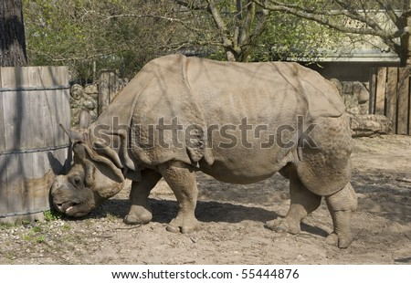 one big rhinoceros in zoo