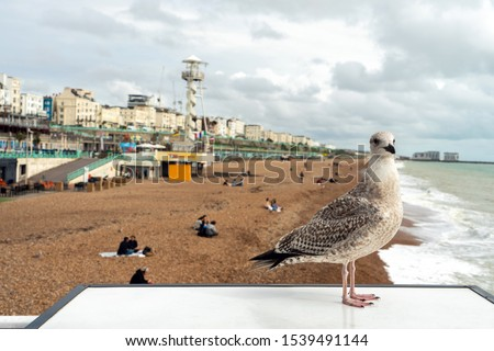 One bird seagull standing in front view with beach sand, group tourism, people sunbathe and brighton building in seafront at Brighton Palace Pier, UK.