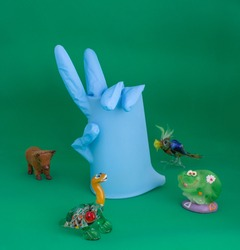 One blue medical glove with bent fingers on isolated background with smiling toy frog, turtle, bird, cow. A sign of victory over the epidemic of diseases transmitted to humans by animals