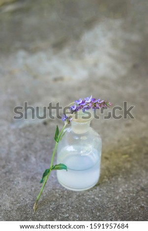 one branch Salvia pratensis, meadow clary or meadow sage flowers near bottle of medicine on a concrete background. Collection of herbs in season. Medicines from medicinal plants. Collecting her