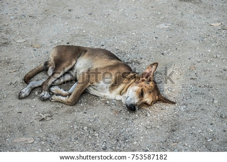 one brown dog laying down on ground.A dog was sleep. #753587182