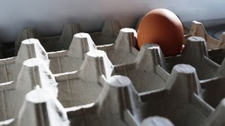 one brown egg in a carton with many cells close-up, a chicken egg with a beige shell remaining dingy in a huge box with grooves, a food product rich in protein