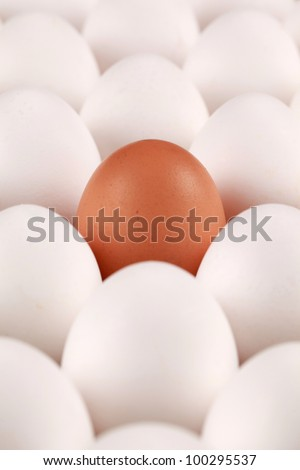 One brown egg surrounded by white eggs in a box. The focus is on the brown egg.