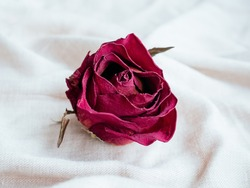 One bud of dried red rose flower on pastel linen fabric background. Traditional symbol of a broken heart and lost love. Memory, death, loss concept. Life and dead. Soft focus. Close up
