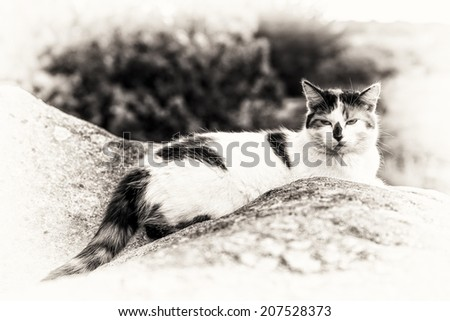 One cat asleep between rocks. Black and white fine art outdoors portrait of domestic cat.