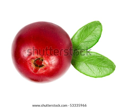 one cranberry isolated on white background