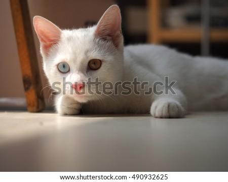 one cute and naughty white cat with all kinds of lovely