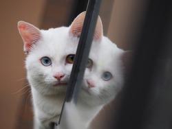 One cute white cat