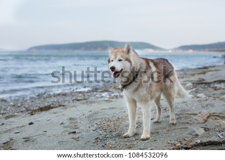 one day with lovely husky male...