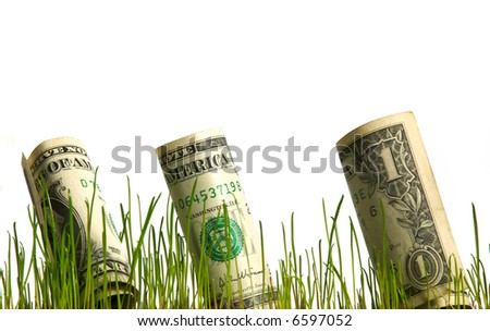 One dollar bills growing in the grass