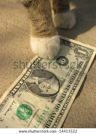 One dollar under paws of a cat