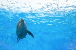 One dolphin swimming with a smile