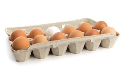 one dozen eggs, eleven brown, one white, in a cardboard egg carton isolated on white