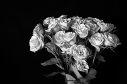 One Dozen Roses in monochrome with black background