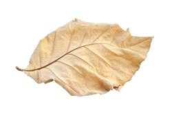 One dry leaf isolated, sear brown foliage, yellow stalk drop on the ground (with clipping path)