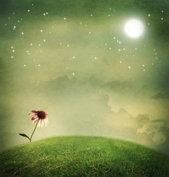 One echinacea flower on a fantasy hilltop under the moon