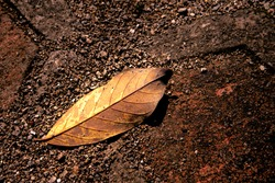 one fallen leaves on the ground of orange, yellow, brown color with sand on the gravel, texture background. A close-up fall leave on the ground. Autumn fallen leave background.