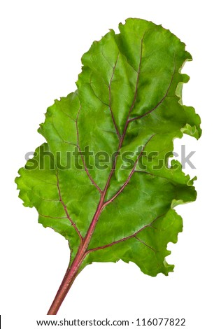 one fresh leaf beet root isolated on white background