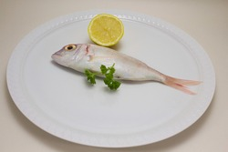 one gilthead rose on white plate