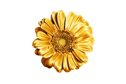 One golden gerbera flower white background isolated closeup, gold metal petals gerber flower, shiny yellow metallic leaves daisy, single decorative chamomile, floral vintage decoration, design element