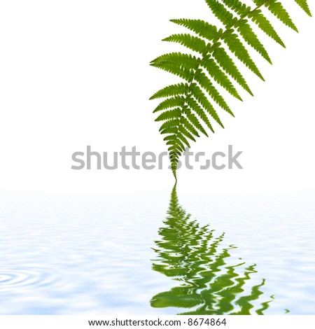 One green fern leaf with reflection in water, set against a white background.