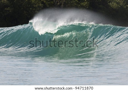 one green wave breaking in indonesia with trees at the background