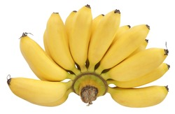 One hand of yellow Lady's Finger Bananas isolated on white background. When raw has green color & yellow when ripe. The banana are small, thin skinned & sweet taste. Rich in vitamin C & Beta Carotene.