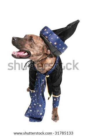 one happy wizard dog clothed over white