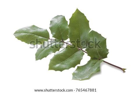 one hard elastic green leaf of a wild grape bush on a white background