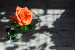 One head of the beautiful orange rose with green leaves in the glass in the sunlight with lights and shadows on the wooden background