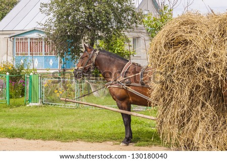 One horse transportation hay on wooden cart - Ukraine. In background traditional cottage.