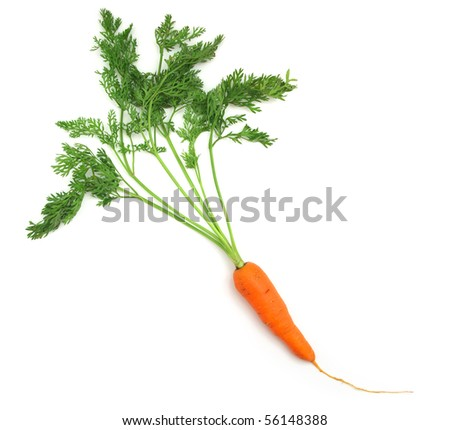 One isolated carrot. Element of food design.