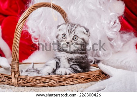 One kitten look out of a Christmas basket of Santa Claus while Santa Claus holding a gift basket with a kitten on Christmas Eve on an isolated white background