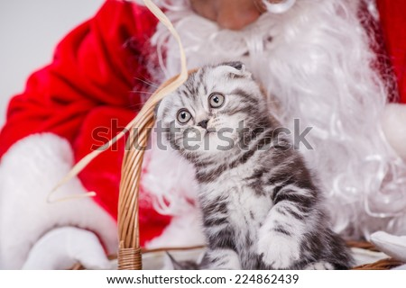 One kitten peeking out of a Christmas basket of Santa Claus while Santa Claus holding a gift basket with a kitten on Christmas Eve on an isolated white background