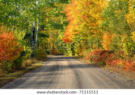 One lane dirt road disappears into  the distance on this tree lined logging road in upper peninsula of Michigan.  Brilliant  trees at peak color fill the fall woods.