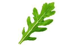 One leaf of arugula on a white background isolated. clipping path