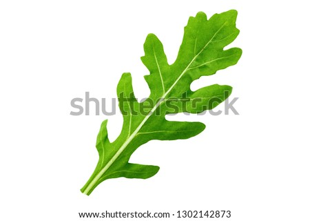 One leaf of arugula on a white background isolated. clipping path ストックフォト ©